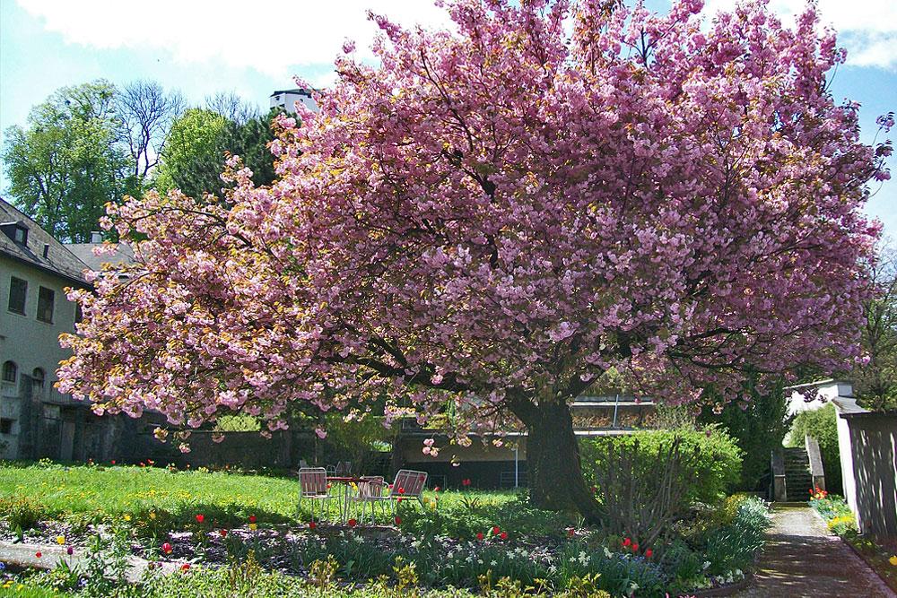 Frühling am Stift Nonnberg